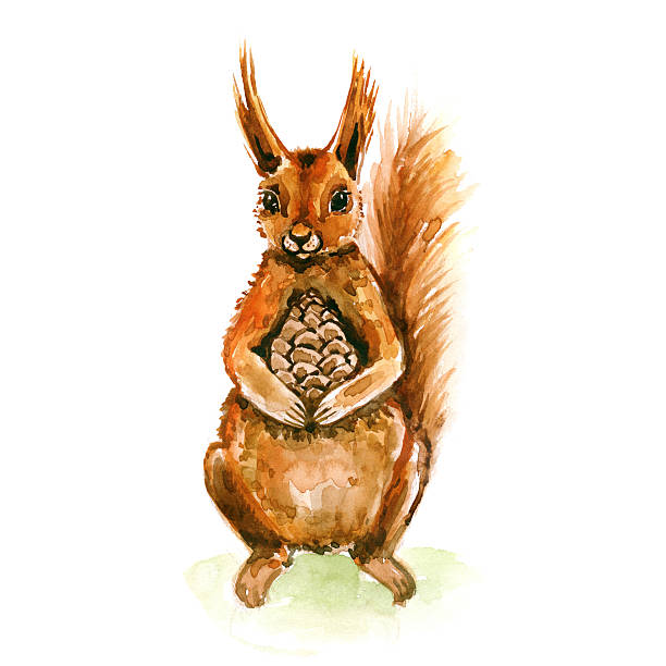 Watercolor cute squirrel with pine nuts. St. Valentin's present. stock photo