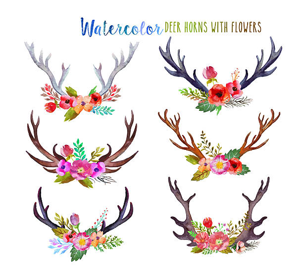watercolor deer horns - antlers stock photos and pictures