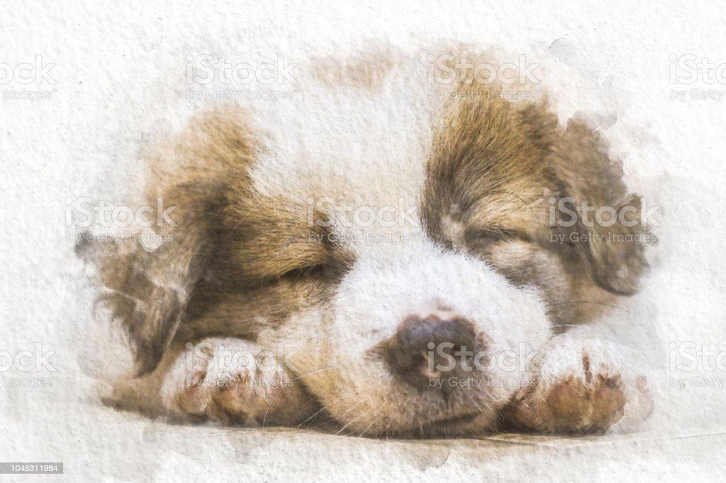 Beyaz Kağıt Arka Plan üzerinde Renk Ile Katta Uyuyan Suluboya Köpek