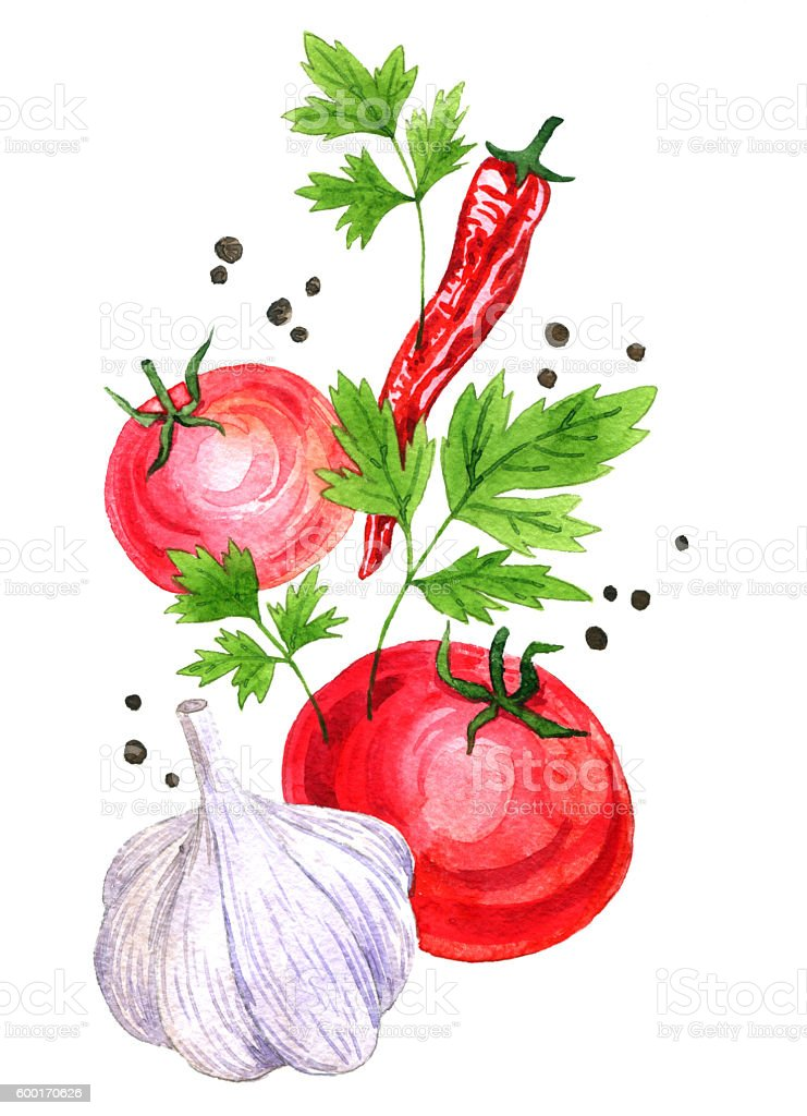 watercolor drawing vegetables stock photo