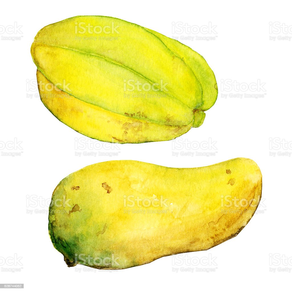 Watercolor exotic fruits mango and carambola stock photo