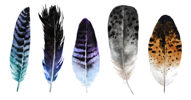 Watercolor feathers stock photo