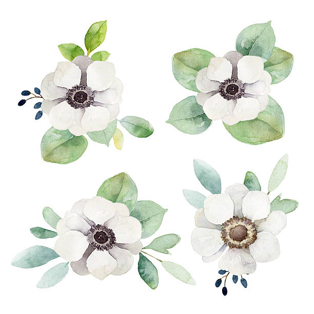 watercolor floral boutonnieres with anemones and eucalyptus leaves - anémone photos et images de collection