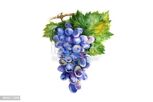 istock Watercolor grapes branch on white backgroun 504017358