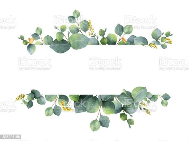Watercolor green floral banner with silver dollar eucalyptus leaves picture id653424196?b=1&k=6&m=653424196&s=612x612&h=e0qmnedrwdu7kp1juzr4rr140y7uowoyvja1fmcy b8=