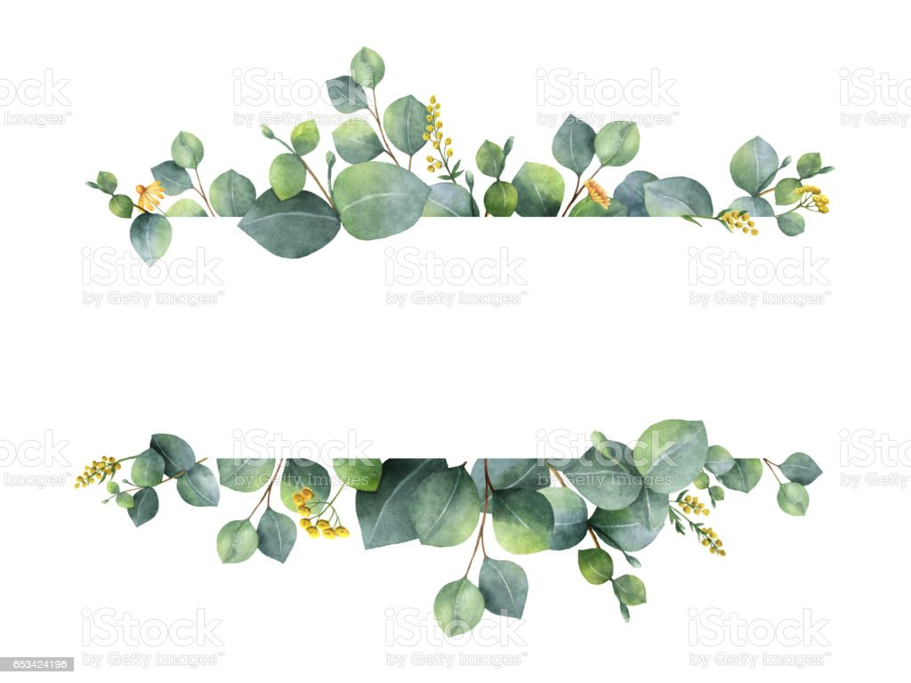 Watercolor green floral banner with silver dollar eucalyptus leaves and branches isolated on white background. stock photo