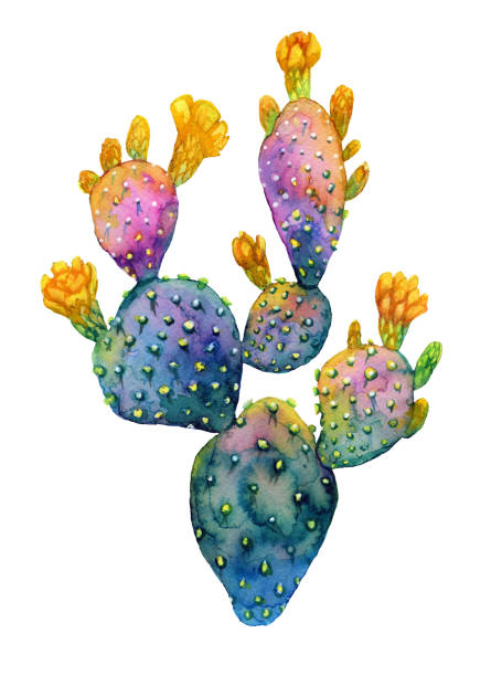 watercolor hand drawn cactus. blooming opuntia. - graphic print stock photos and pictures