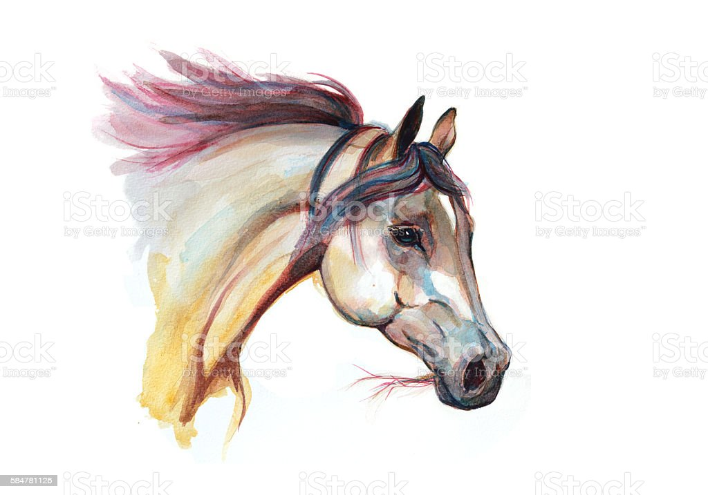 Watercolor horse head stock photo