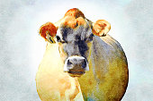 This is my Photographic Image of a cow in a Watercolour Effect. Because sometimes you might want a more illustrative image for an organic look.