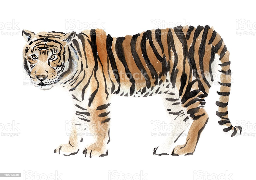 Watercolor illustration of a tiger stock photo
