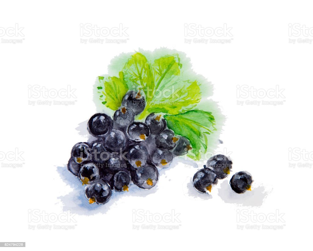 Watercolor illustration of blueberries stock photo