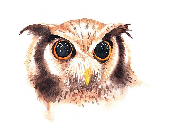watercolor illustration of wild brown owl with beautiful big eye - eule zeichnung stock-fotos und bilder
