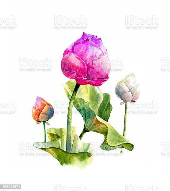 Watercolor illustration painting of leafs and lotus picture id598094874?b=1&k=6&m=598094874&s=612x612&h=vdc4l1yvw1l9779xx za fbdjfn2acof1am9l8s2x4e=