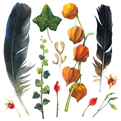 istock Watercolor illustration with branches, leaves and berries. Set of winter and autumn forest plants and feathers. Collection of herbarium garden. Ivy, cape gooseberry, wild rose 931937692