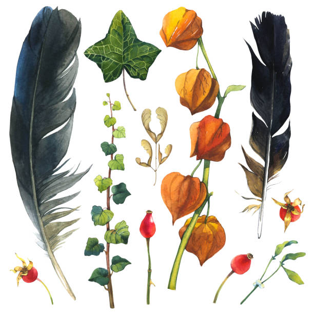 Watercolor illustration with branches, leaves and berries. Set of winter and autumn forest plants and feathers. Collection of herbarium garden. Ivy, cape gooseberry, wild rose stock photo