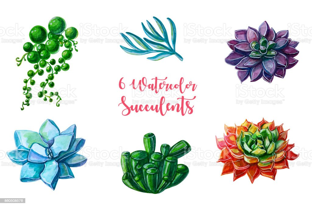 Watercolor illustrations - succulents clipart. All elements are isolated. Perfect for Wedding invitation, greeting card, postcard, poster, textile, print etc stock photo