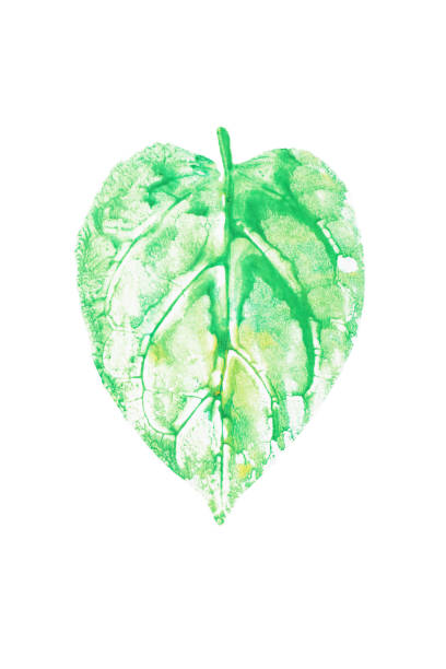 watercolor leaf printed, heart shaped green leaf on white background for nature conservation concept. clipping path included. - tree logo stock photos and pictures