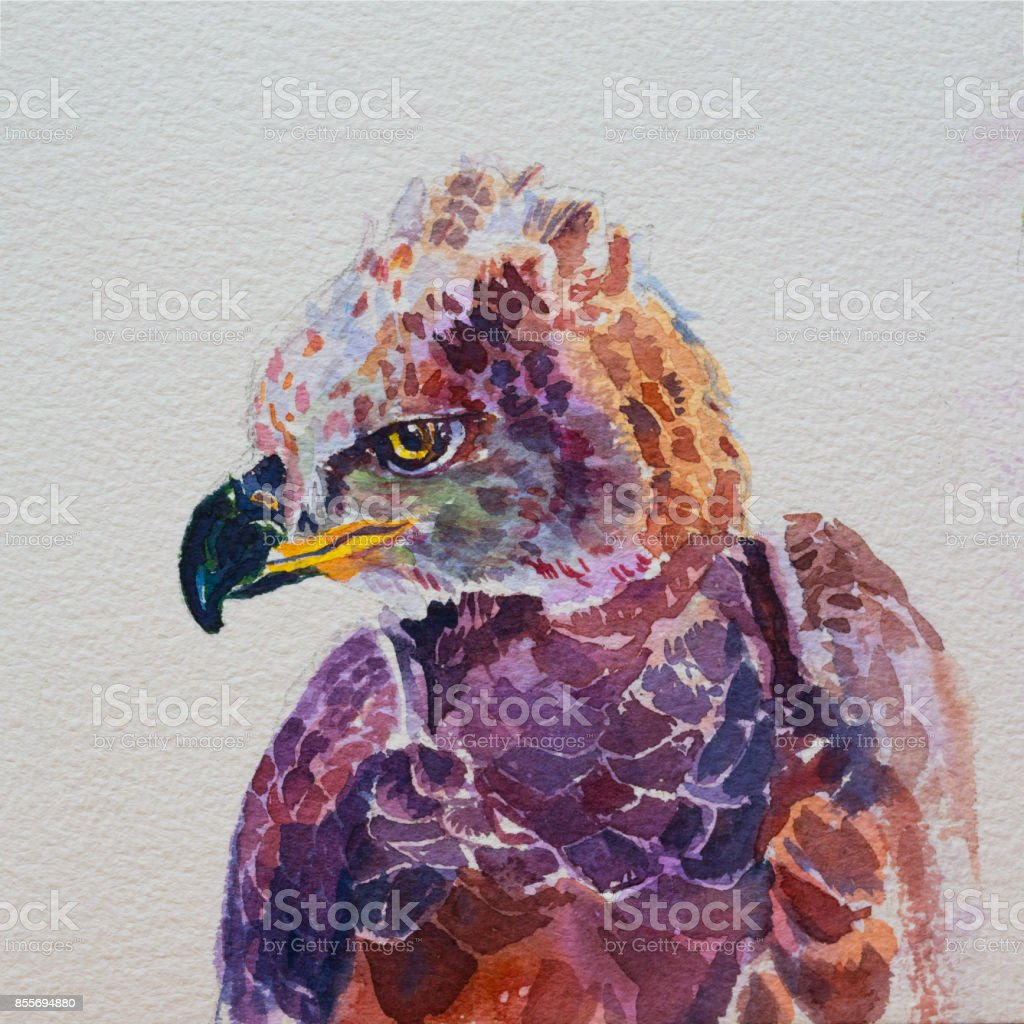 Watercolor of African crowned eagle on white stock photo