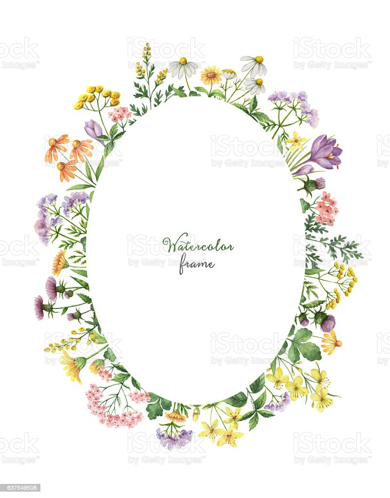 Watercolor oval wreath with meadow plants. stock photo