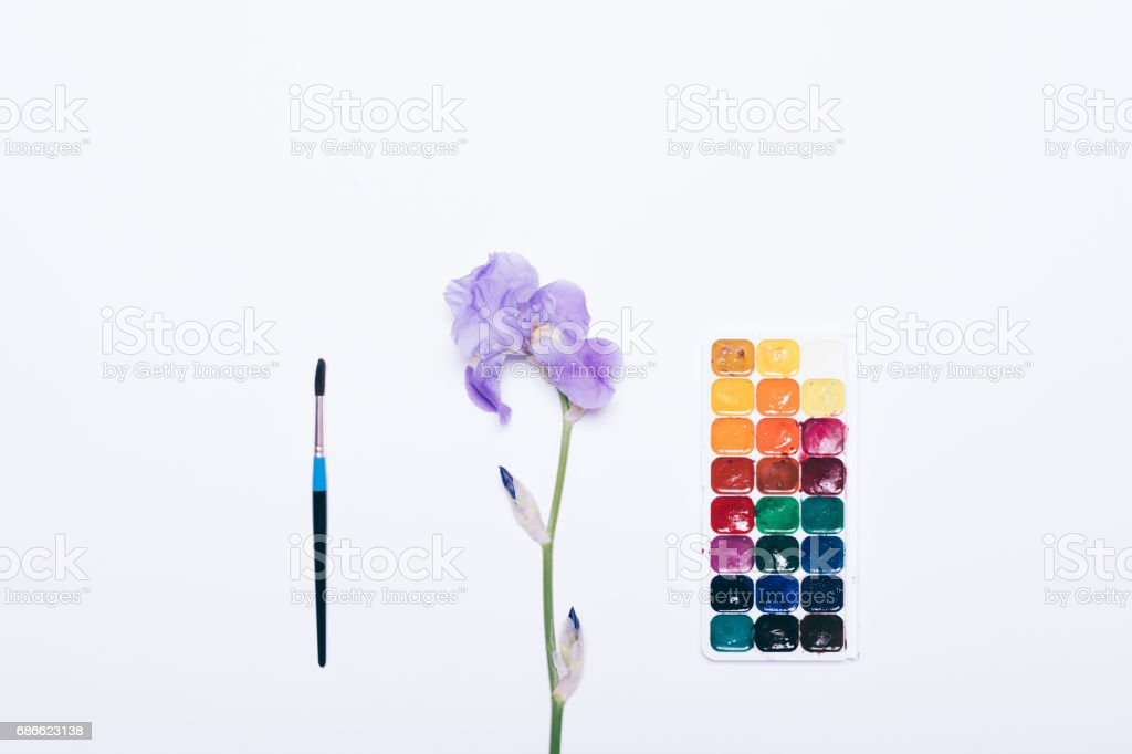 Watercolor paint, brush and blue flower lie on a white background royalty-free stock photo