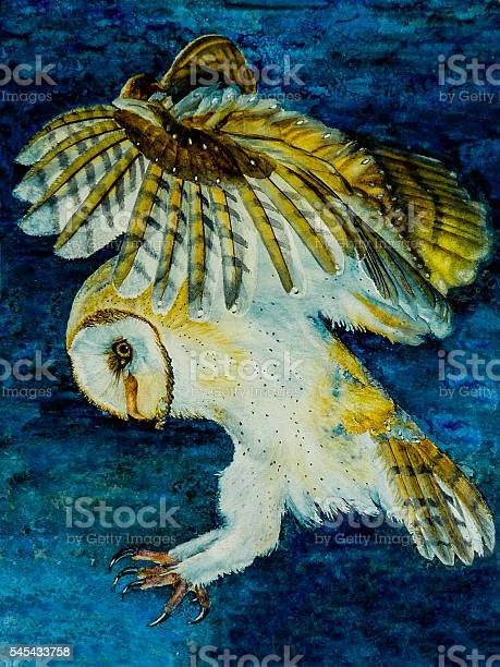 Watercolor painting of a barn owl hunting picture id545433758?b=1&k=6&m=545433758&s=612x612&h=rlwiseg0xrkzjn aem9pxqm3yqh ev7d29ucslaaths=