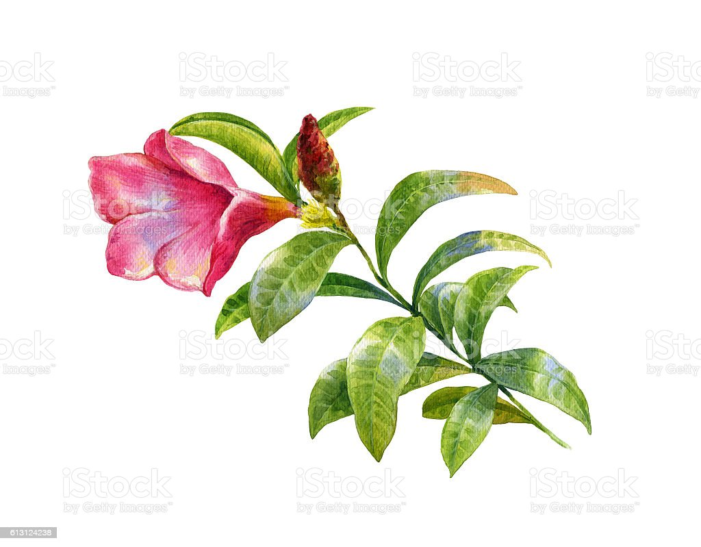 watercolor painting of leaves and flower illustration stock photo