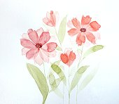 Watercolor painting of red flowers on white background