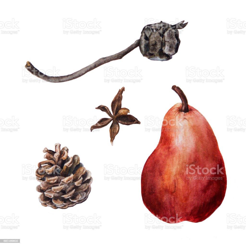 Acuarela conos de pino y ciprés con pera madura rojo foto de stock libre de derechos
