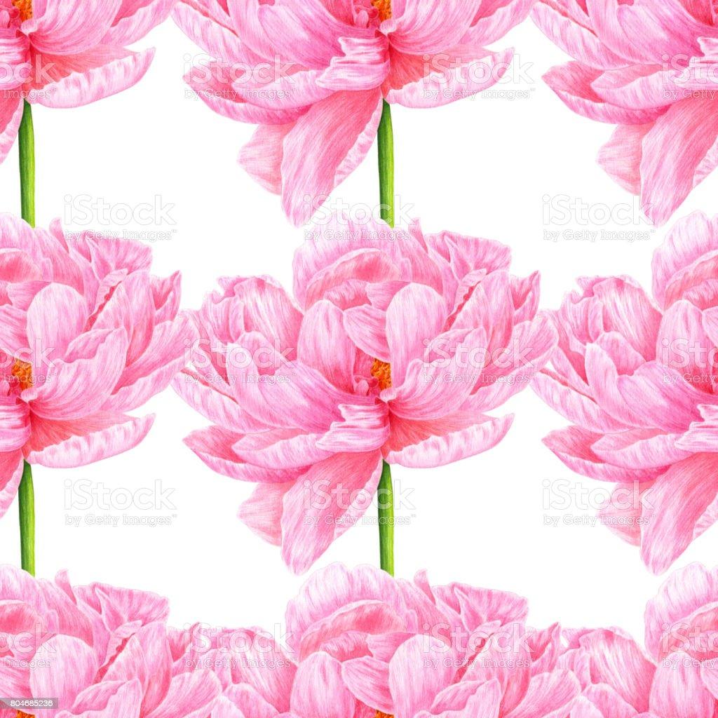 Pivoine Rose Aquarelle Modele Sans Couture Art Botanique Modele Pour