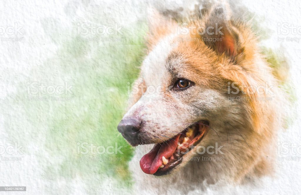 Watercolor Portrait Of Siberian Husky With Abstract Color On White