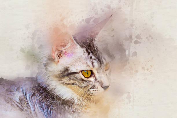 aquarell portrait tabby katze. kunst-farbe-farbe auf leinwand für hintergrund - katze zeichnen stock-fotos und bilder