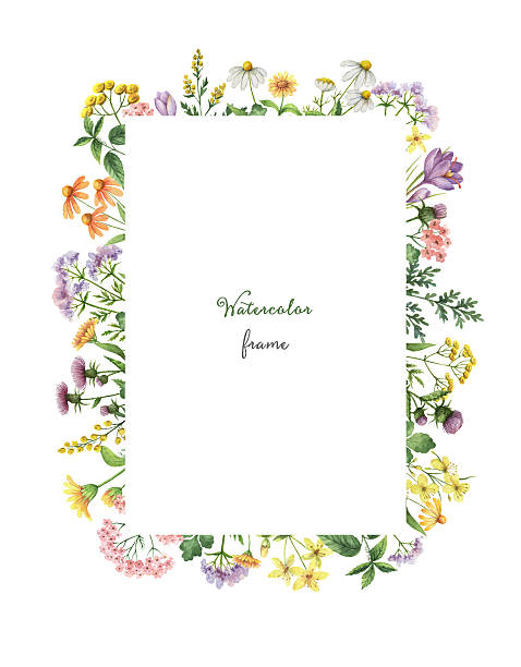 Watercolor rectangular frame with meadow plants. – Foto