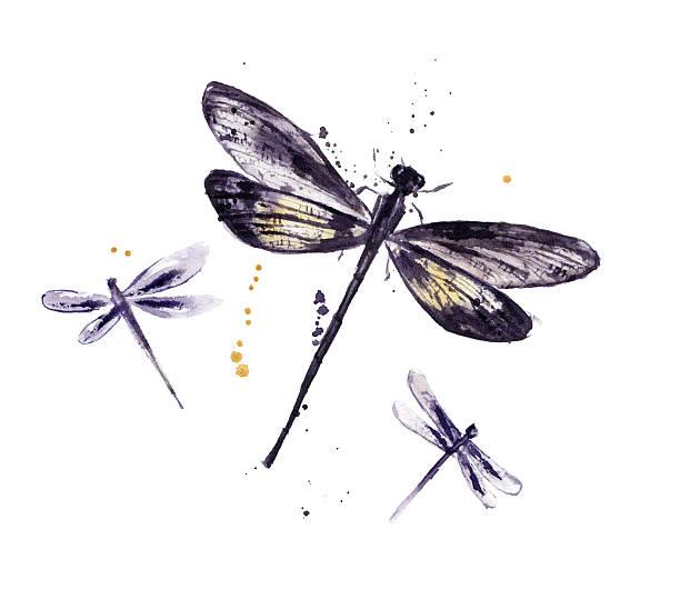 Watercolor set of dragonflies picture id472657186?b=1&k=6&m=472657186&s=612x612&w=0&h=afkqhbjcwnffjv8ikveux5wfbjkhnct tolvfotjyis=