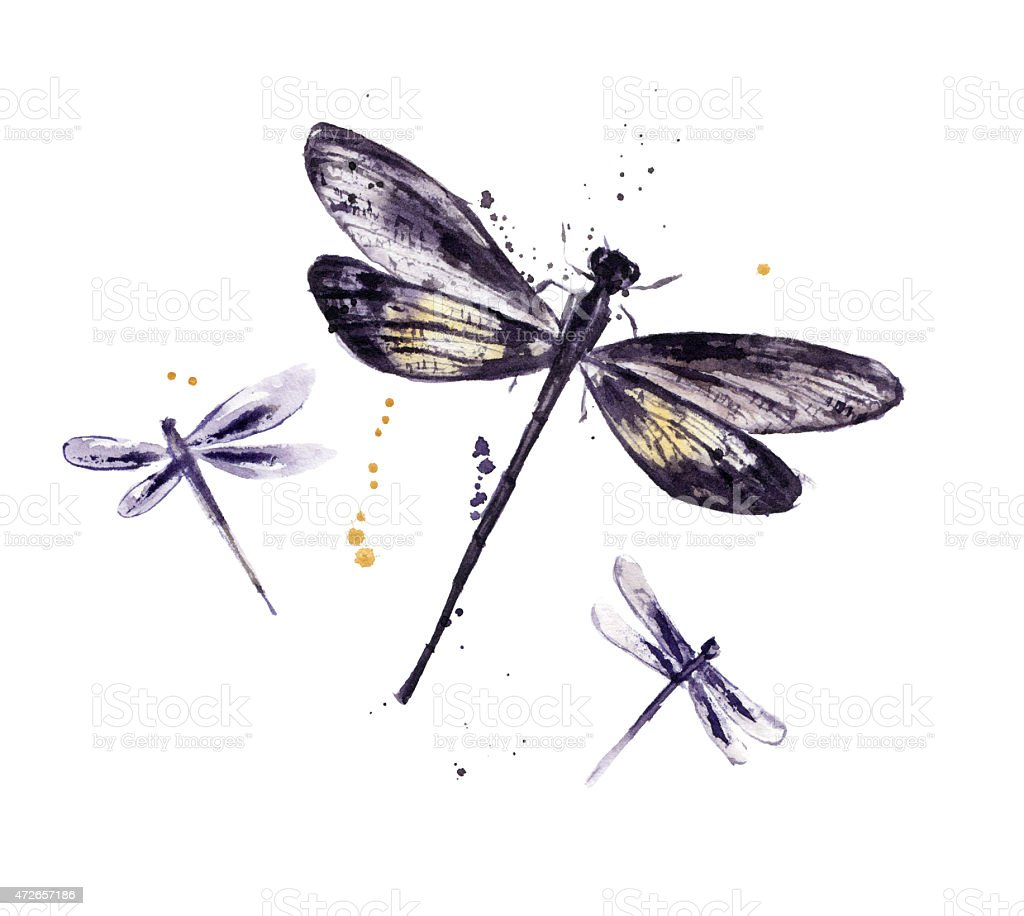 Watercolor set of dragonflies stock photo