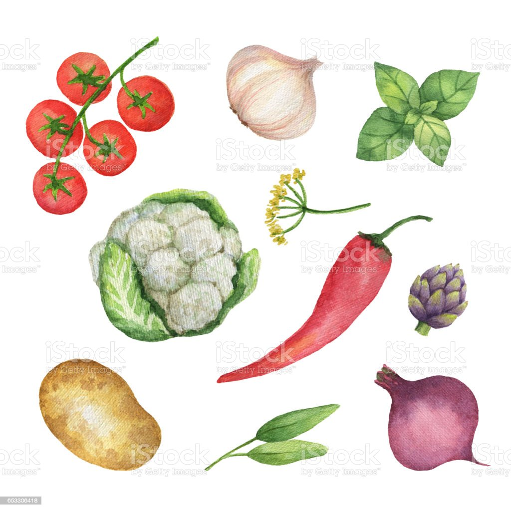 Watercolor set vegetables and herbs isolated on white background. stock photo