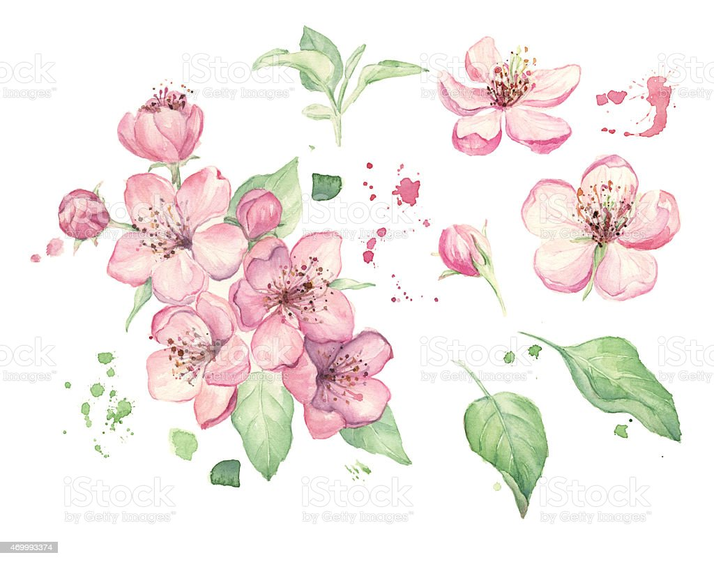 Watercolor spring flowers stock photo