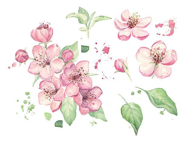 Aquarell Frühling Blumen  – Foto