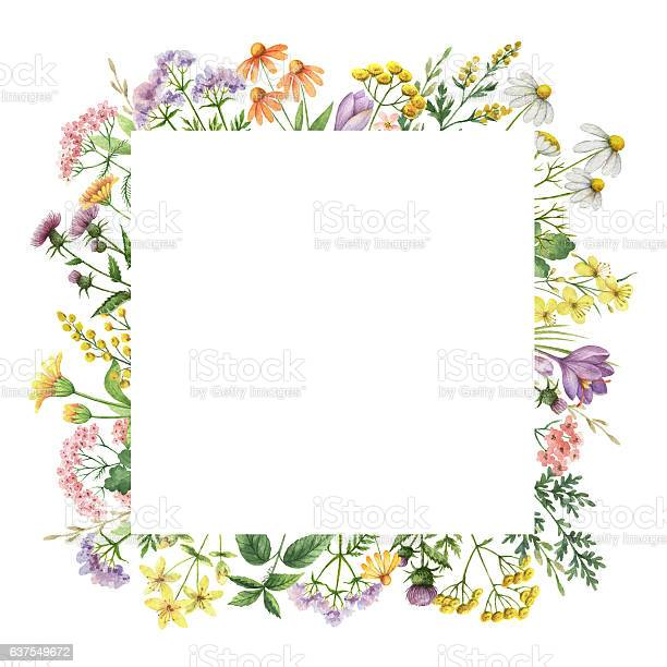 Watercolor square frame with medical plants picture id637549672?b=1&k=6&m=637549672&s=612x612&h=idaw5dzwo2rkwrcpjgayh e9wow7irby3cuyivqmydw=