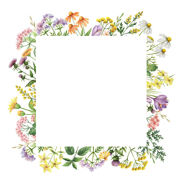 Watercolor square frame with medical plants picture id637549672?b=1&k=6&m=637549672&s=612x612&w=0&h=zf1xilhohsdueaaq0q0dtp4xvnbwnx1v90ez2trlqda=