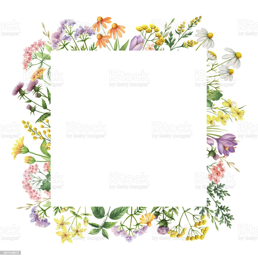 Watercolor square frame with medical plants. – Foto