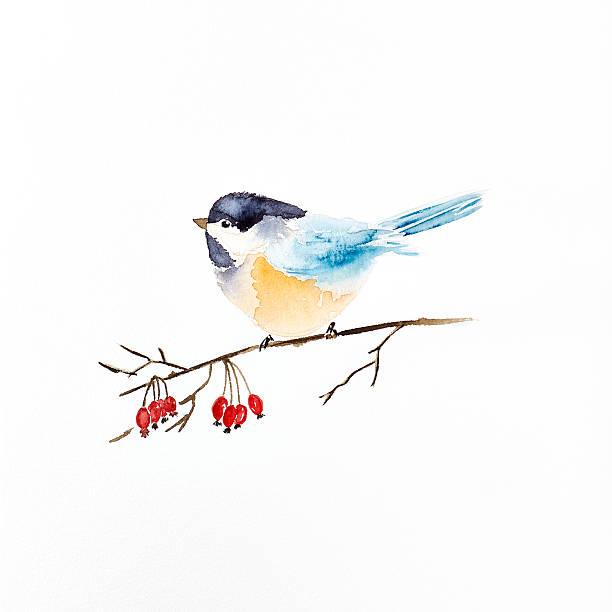Watercolor tit on a winter berry sprig picture id585768986?b=1&k=6&m=585768986&s=612x612&w=0&h=hyxwo98t8bqjrtiywkoli6vr xkrqfokrkvt abvd5y=