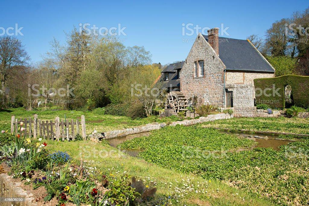 Agrião cultura campo, Veules des rosas, a Normandia França - foto de acervo