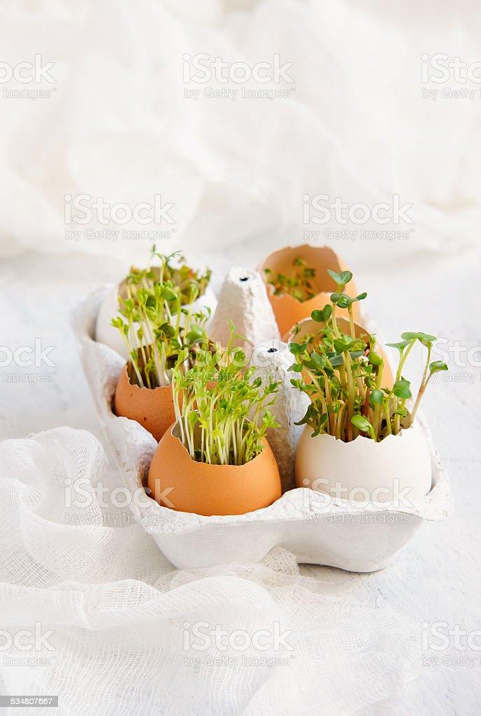 Salada de agrião e em Casca de ovo de páscoa cartão - foto de acervo