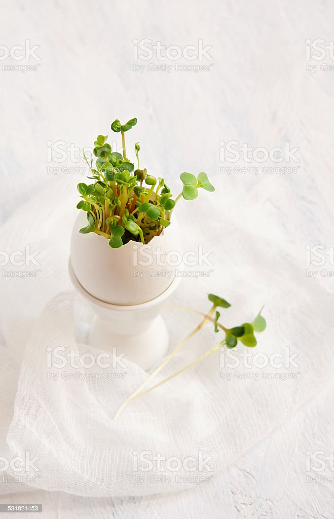 watercress salad and in egg shell - Easter card stock photo