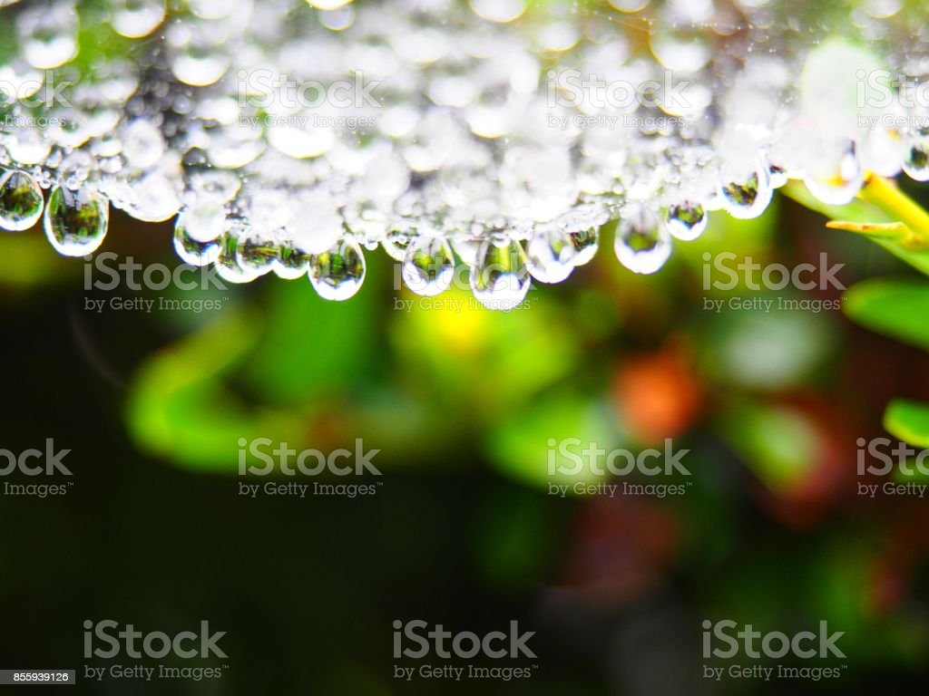 Waterdrop, cobwebs stock photo
