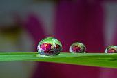 waterdrop, reflection on grass