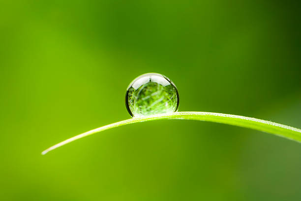 Waterdrop.  Water Drop Leaf Environmental Conservation Balance Green Nature stock photo