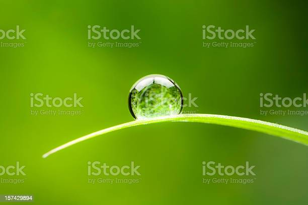 Photo of Waterdrop.  Water Drop Leaf Environmental Conservation Balance Green Nature