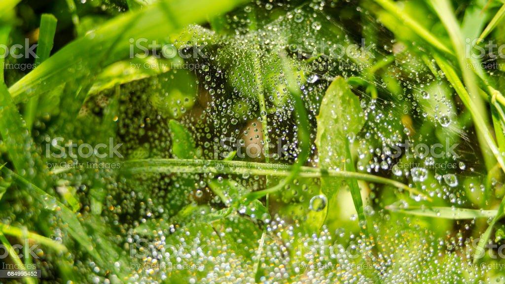 waterdrops on a leaf Lizenzfreies stock-foto