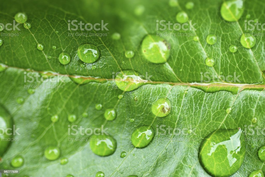 waterdrops on green leaf royalty-free stock photo